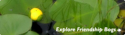 Explore Friendship Bogs