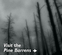 Visit the Pine Barrens